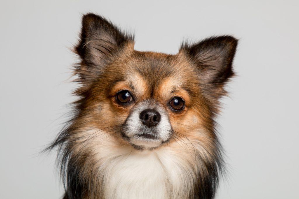 Dog Trainer, Dog Trainer, Dog Behavior Consultant, Positive Reinforcement Trainer