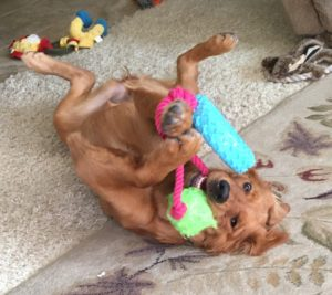 Young Pup Playing with a Toy