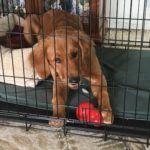 Dog in Crate with Kong