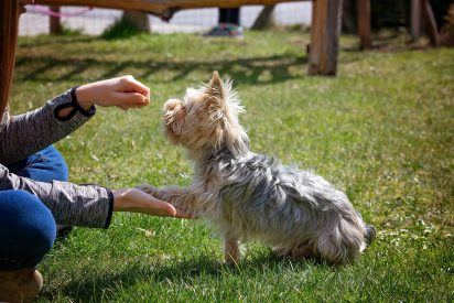 Dog Giving Paw with Treat Lure
